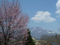 初日、桜とコブシと浅間山